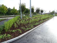 Petrol station car park with newly planted shrubbery