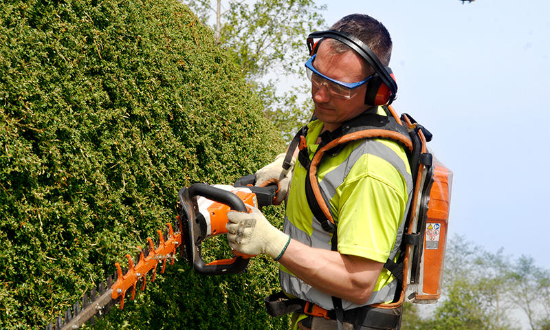 landscape contractor using Stihl hedge trimmers to prune shrubbery