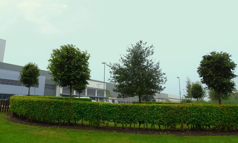 shrubbery and trees at a large distribution centre in nottinghamshire